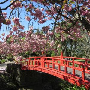 Oamaru-Public-Gardens-bridge
